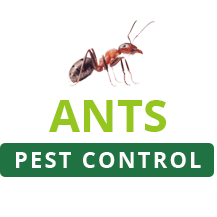Ants Pest Control Perth profile image